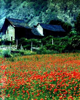 poppies spain PRINT good