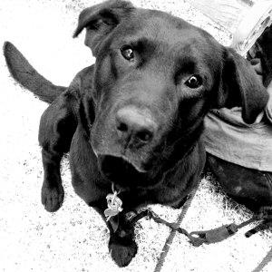 elaine's dog